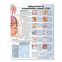 Infecciones de transmision sexual / Sexually Transmitted Infections Anatomical Chart