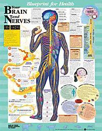 Blueprint for Health Your Brain and Nerves
